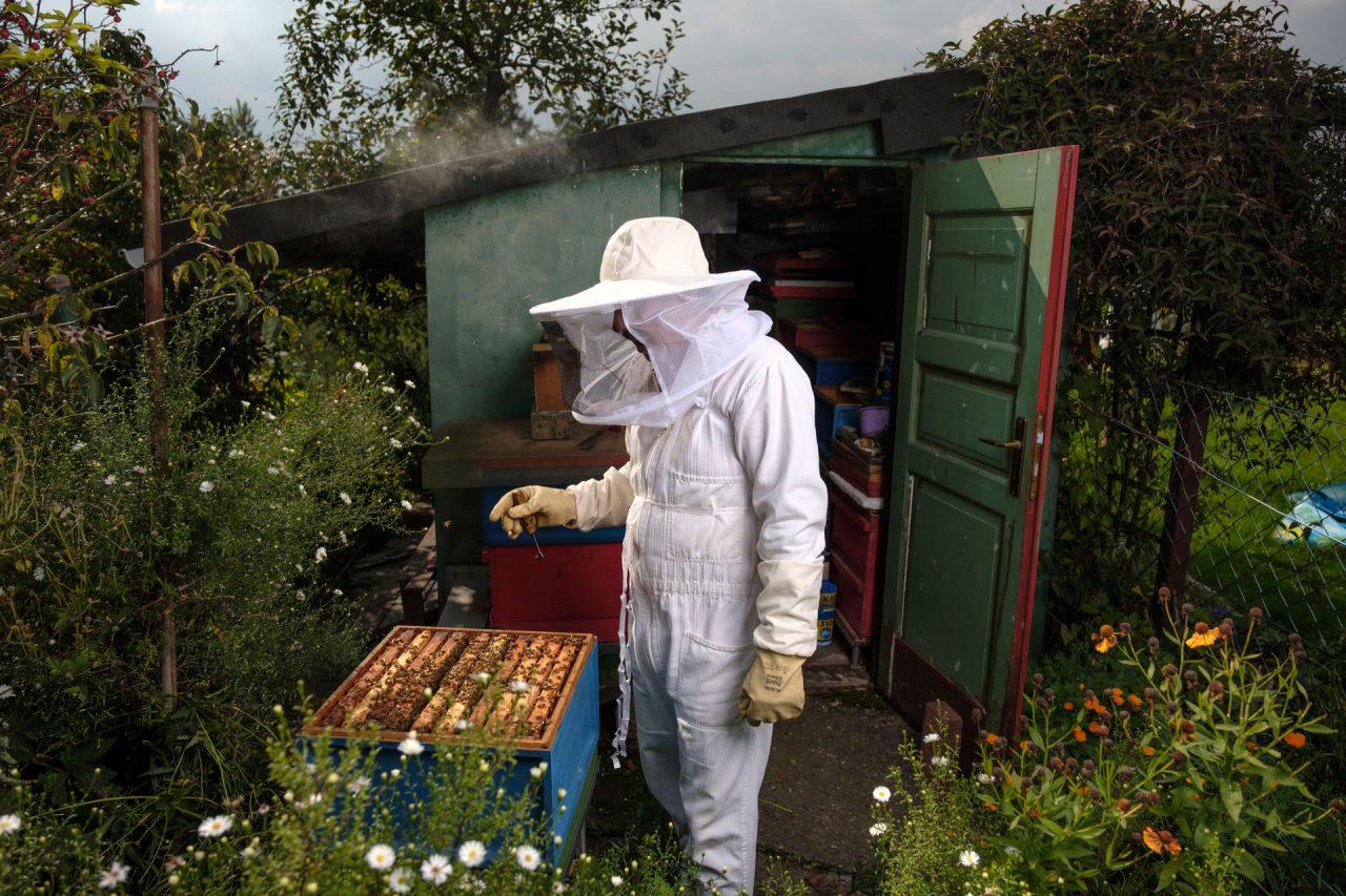 Bienenkönig rudolf seibt gag köln