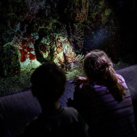 taschenlampenfuehrung-durch-das-aquarium-feuerfisch