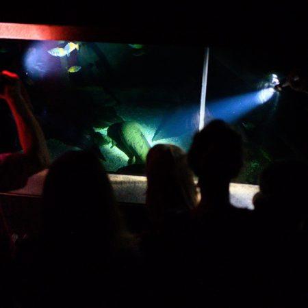 taschenlampenfuehrung-durch-das-aquarium-guenter-goetz-lungenfisch
