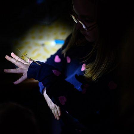 taschenlampenfuehrung-durch-das-aquarium-heuschrecke