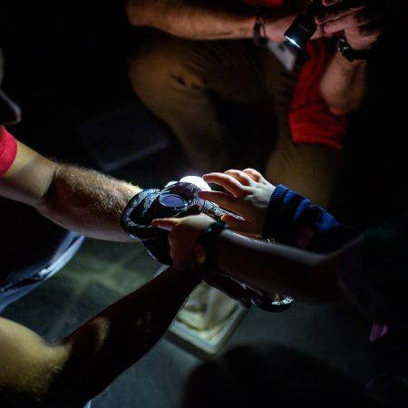 taschenlampenfuehrung-durch-das-aquarium-kleine-schlange-streicheln