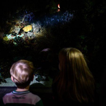 taschenlampenfuehrung-durch-das-aquarium-kugelfisch