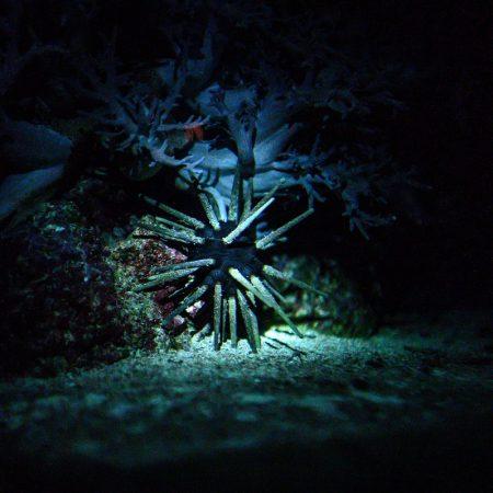 taschenlampenfuehrung-durch-das-aquarium-seeigel