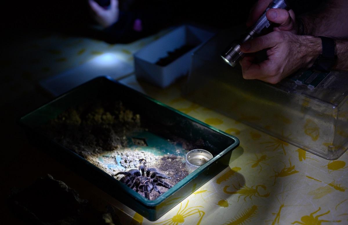 taschenlampenfuehrung-durch-das-aquarium-vogelspinne-02