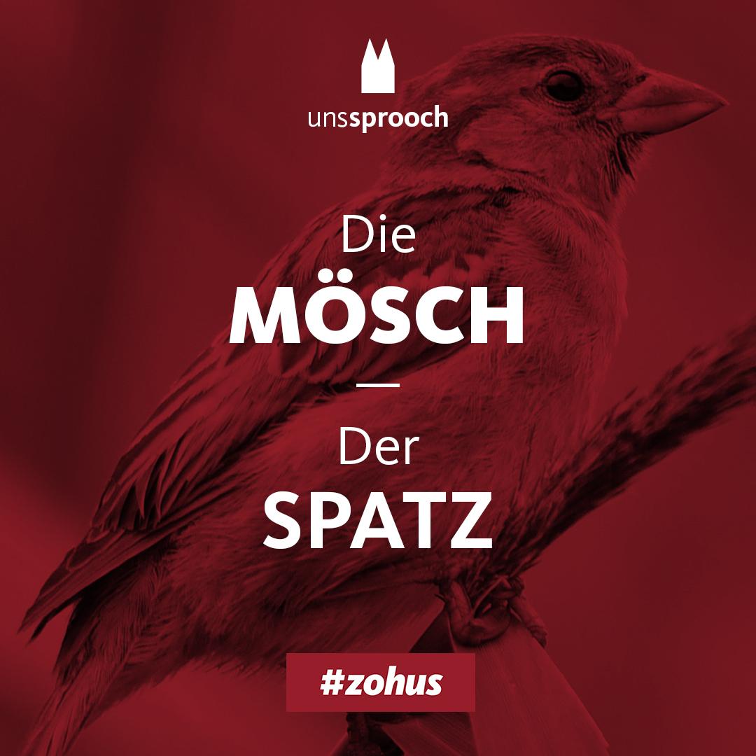 Köln Beste Uns Sprooch_mösch