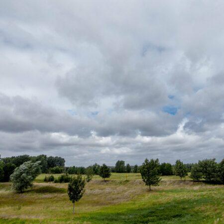 Die Worringer Rheinaue