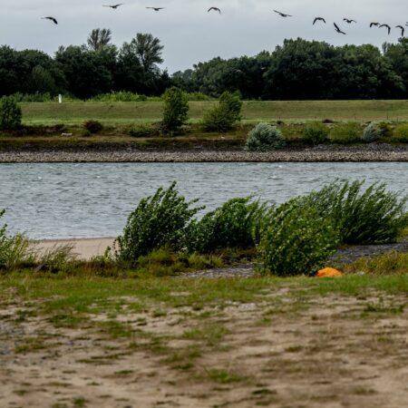 Ein Vogelschwarm über dem Worringer Rheinufer