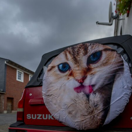 Ein Katze auf der Rückseite eines Autos streckt die Zunge raus.
